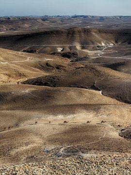 דרום אפריקה תולה תקווה בטכנולוגיית מים ישראלית שתעזור לטפל בבצורת